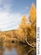Деревья склонившиеся над водой. Осень. Стоковое фото, фотограф Асадулина Юлия / Фотобанк Лори