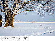 Береза в зимний солнечный день. Стоковое фото, фотограф Анфимов Леонид / Фотобанк Лори