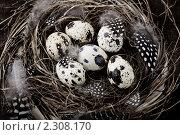 Купить «Птичье гнездо с яйцами (пасхальные композиции)», фото № 2308170, снято 12 марта 2010 г. (c) Наталия Кленова / Фотобанк Лори