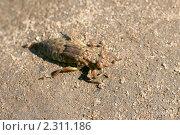 Купить «Личинка стрекозы», фото № 2311186, снято 13 июля 2008 г. (c) Щеголева Ольга / Фотобанк Лори