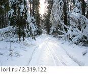 Купить «Дорога в зимнем лесу», фото № 2319122, снято 15 января 2011 г. (c) Исаев Михаил / Фотобанк Лори