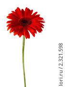 Купить «Красная гербера», фото № 2321598, снято 12 апреля 2010 г. (c) Литова Наталья / Фотобанк Лори