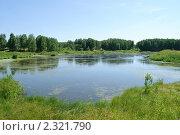 Заросший пруд. Стоковое фото, фотограф Сайфутдинов Ильгиз / Фотобанк Лори