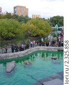 Купить «В Московском зоопарке», эксклюзивное фото № 2325858, снято 12 сентября 2010 г. (c) lana1501 / Фотобанк Лори