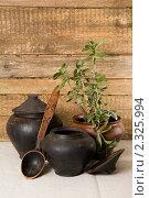 Купить «Старые горшки и денежное дерево», фото № 2325994, снято 5 февраля 2011 г. (c) Владимир Фаевцов / Фотобанк Лори