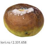 Купить «Несвежее яблоко», фото № 2331658, снято 6 февраля 2011 г. (c) Игорь Долгов / Фотобанк Лори