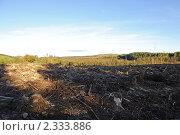 Купить «Вырубленный лес», фото № 2333886, снято 16 октября 2010 г. (c) Татьяна Кахилл / Фотобанк Лори