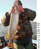 Пойманная щука в руках рыбака. Стоковое фото, фотограф Алёшина Оксана / Фотобанк Лори