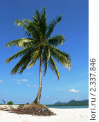 Пальма на пляже (2010 год). Стоковое фото, фотограф Баранов Александр / Фотобанк Лори