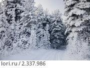 Купить «Санный след из заснеженного елового леса», фото № 2337986, снято 23 января 2011 г. (c) Владимир Мельников / Фотобанк Лори