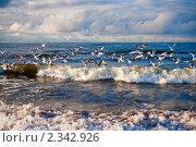 Купить «Волны и чайки, Балтийское море», фото № 2342926, снято 3 января 2011 г. (c) Анна Лурье / Фотобанк Лори