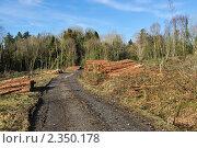 Купить «Уничтожение леса», фото № 2350178, снято 16 февраля 2011 г. (c) Татьяна Кахилл / Фотобанк Лори