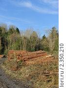 Купить «Вырубка леса», фото № 2350210, снято 16 февраля 2011 г. (c) Татьяна Кахилл / Фотобанк Лори