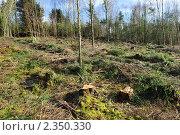 Купить «Пни вместо леса», фото № 2350330, снято 16 февраля 2011 г. (c) Татьяна Кахилл / Фотобанк Лори