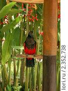 Купить «Щетиноголовый попугай (Бали Парк Птиц)», фото № 2352738, снято 18 февраля 2011 г. (c) Юлия Севастьянова / Фотобанк Лори