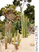 Купить «Кактусы в ботаническом саду Кальяри, Сардиния», фото № 2361778, снято 27 мая 2010 г. (c) Татьяна Крамаревская / Фотобанк Лори