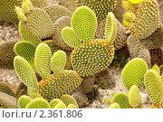 Купить «Кактусы в ботаническом саду Кальяри, Сардиния», фото № 2361806, снято 27 мая 2010 г. (c) Татьяна Крамаревская / Фотобанк Лори