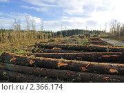 Купить «Вырубка леса», фото № 2366174, снято 16 февраля 2011 г. (c) Татьяна Кахилл / Фотобанк Лори