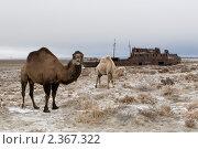 Купить «Аральское море. Корабли пустыни», фото № 2367322, снято 30 ноября 2005 г. (c) Вадим Морозов / Фотобанк Лори