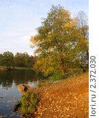 Золотая осень. Стоковое фото, фотограф Маркова Елена / Фотобанк Лори