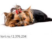 Собака. Стоковое фото, фотограф Дмитрий Милехин / Фотобанк Лори
