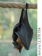 Купить «Летучая мышь», фото № 2379154, снято 12 января 2007 г. (c) Юлий Шик / Фотобанк Лори