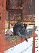 Голубь на молельном барабане,dove on prayer drum. Стоковое фото, фотограф Владимир Нестеренко / Фотобанк Лори