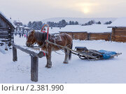 Купить «Лошадь, запряженная в сани-розвальни», фото № 2381990, снято 7 января 2011 г. (c) Ирина Грищенко / Фотобанк Лори