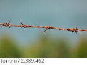 Купить «Стальная колючая проволока», фото № 2389462, снято 15 января 2010 г. (c) Дмитрий Рухленко / Фотобанк Лори