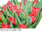 Красные тюльпаны на белом фоне. Стоковое фото, фотограф Алёшина Оксана / Фотобанк Лори