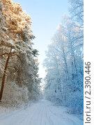 Зимний лес. Стоковое фото, фотограф Михеев Павел / Фотобанк Лори