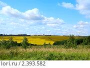 Купить «Летний пейзаж», эксклюзивное фото № 2393582, снято 24 августа 2008 г. (c) Татьяна Белова / Фотобанк Лори