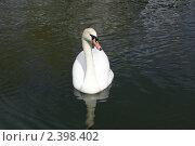 Купить «Лебедь», фото № 2398402, снято 5 мая 2007 г. (c) Коваль Максим / Фотобанк Лори