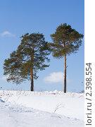Купить «Две сосны», фото № 2398554, снято 7 марта 2011 г. (c) Сергей Лаврентьев / Фотобанк Лори