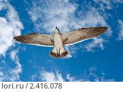 Купить «Чайка», фото № 2416078, снято 21 декабря 2008 г. (c) Дмитрий Рухленко / Фотобанк Лори