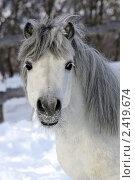 Купить «Портрет серого пони», фото № 2419674, снято 27 февраля 2011 г. (c) Галина Щурова / Фотобанк Лори