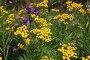 Полевые цветы, фото № 2420090, снято 16 июля 2010 г. (c) Наталья Волкова / Фотобанк Лори