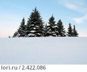Зимний пейзаж - группа елей. Стоковое фото, фотограф UladzimiR / Фотобанк Лори