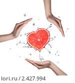 Срез грейпфрута в форме сердце в брызгах воды и женские ладони. Стоковое фото, фотограф Ярослав Данильченко / Фотобанк Лори