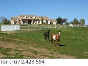 Лошади, коневодство (2011 год). Стоковое фото, фотограф Nataliya Sabins / Фотобанк Лори