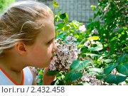 Купить «Девочка нюхает цветы сирени», фото № 2432458, снято 6 июня 2010 г. (c) Владимир Шеховцев / Фотобанк Лори