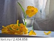 Букет из тюльпанов. Стоковое фото, фотограф Евдокимова Ольга / Фотобанк Лори