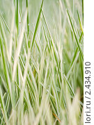 Утренняя роса на траве. Стоковое фото, фотограф Евдокимова Ольга / Фотобанк Лори