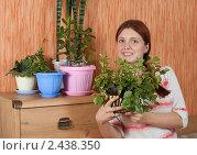 Купить «Девушка с комнатными растениями», фото № 2438350, снято 22 апреля 2010 г. (c) Яков Филимонов / Фотобанк Лори