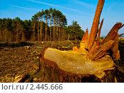 Купить «Вырубка леса», фото № 2445666, снято 29 марта 2011 г. (c) Николай Полищук / Фотобанк Лори