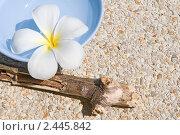 Купить «Цветок плюмерии (frangipani) в сосуде с водой», фото № 2445842, снято 7 января 2011 г. (c) Куликова Татьяна / Фотобанк Лори