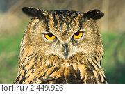 Купить «Филин», фото № 2449926, снято 24 апреля 2007 г. (c) Сергей Соболев / Фотобанк Лори