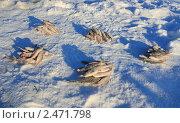 Купить «Пять кучек рыбы после дележки улова», эксклюзивное фото № 2471798, снято 15 января 2011 г. (c) Анатолий Матвейчук / Фотобанк Лори