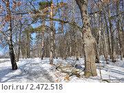 Март в лесу. Стоковое фото, фотограф Алла Вовнянко / Фотобанк Лори