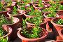Саженцы растений в горшках, фото № 2477862, снято 26 ноября 2010 г. (c) Коваль Василий / Фотобанк Лори